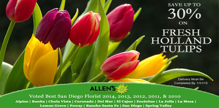 Save 30% on Holland Tulips, Allen's Flowers & Plants Tulips