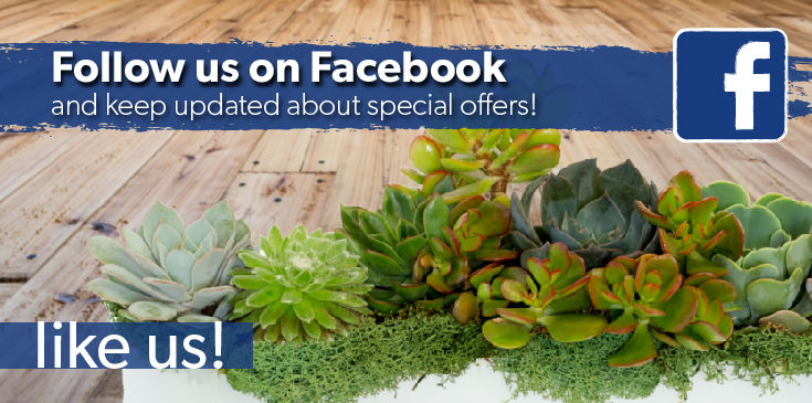 Allen's Flowers and Plants Facebook, Facebook Specials, San Diego's Best Florist Facebook Page. Same Day Delivery Anywhere In The USA.