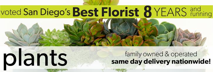 Flowering & Blooming Plants